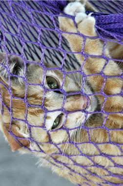 Katze in Hängematte